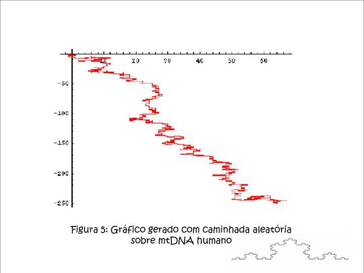 Figura 5: Gráfico gerado com caminhada aleatória sobre mtDNA humano