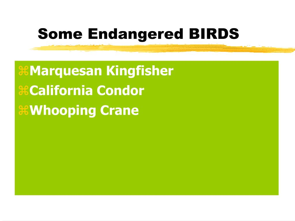 Some Endangered BIRDS