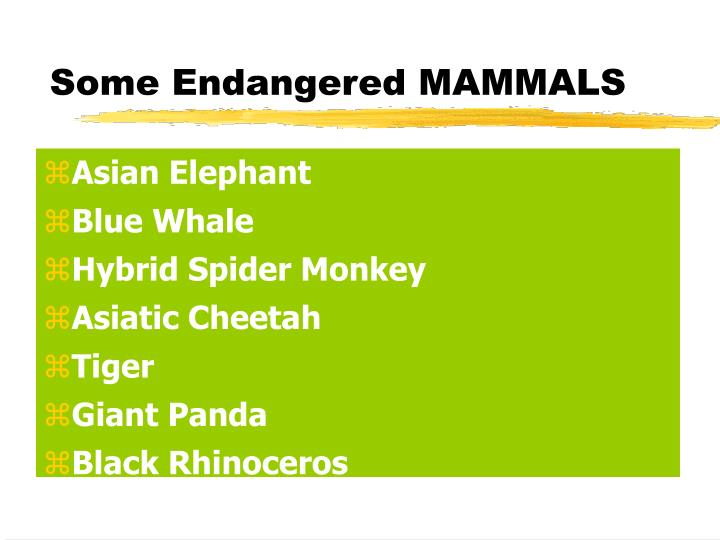 Some endangered mammals