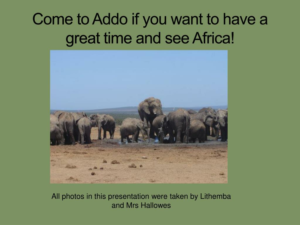 Come to Addo if you want to have a great time and see Africa!