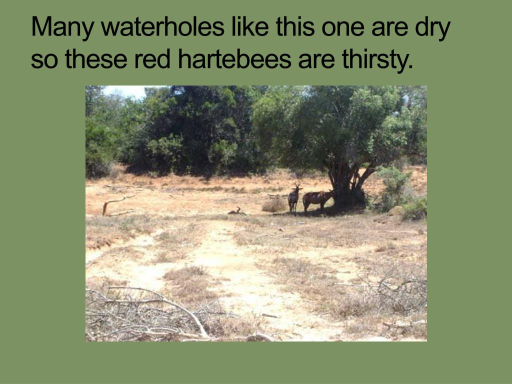 Many waterholes like this one are dry so these red