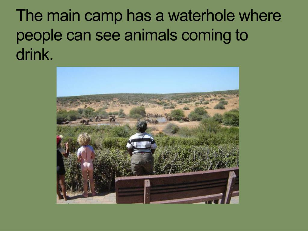 The main camp has a waterhole where people can see animals coming to drink.