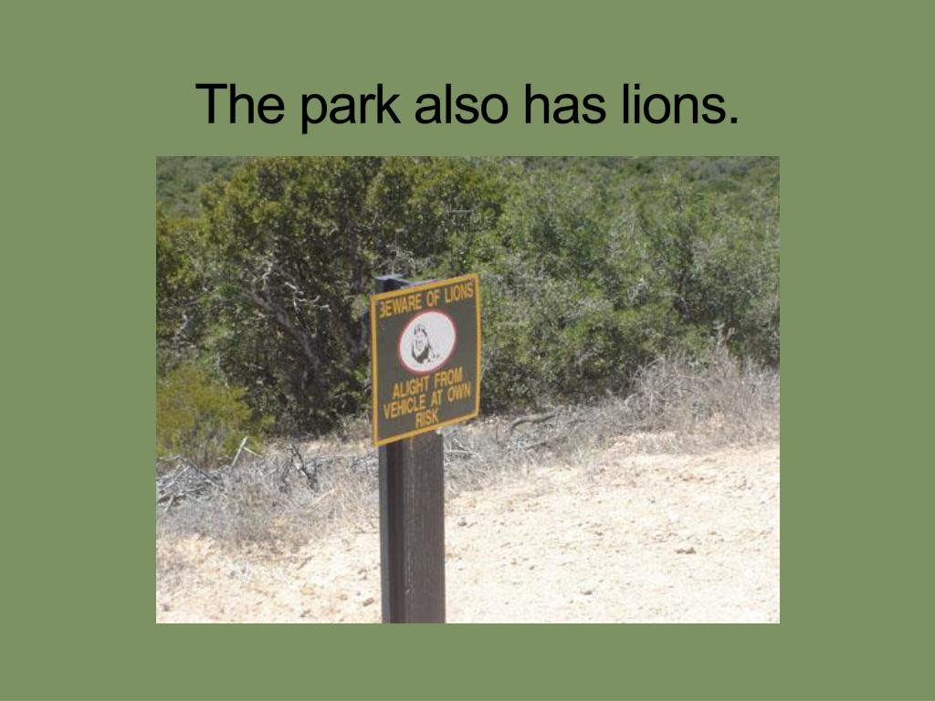 The park also has lions.