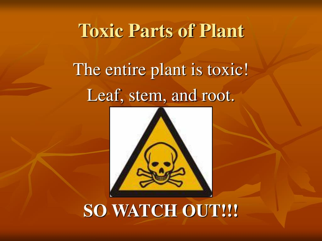 Toxic Parts of Plant