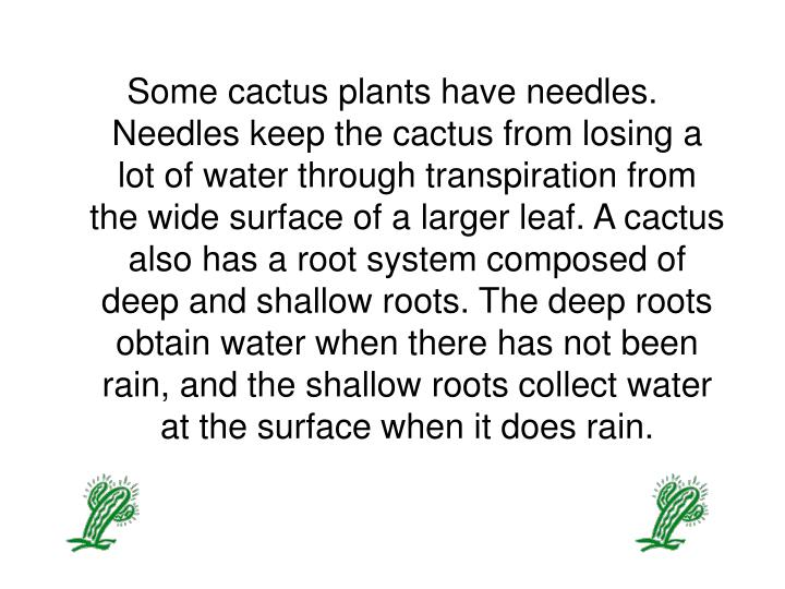 Some cactus plants have needles. Needles keep the cactus from losing a lot of water through transpir...