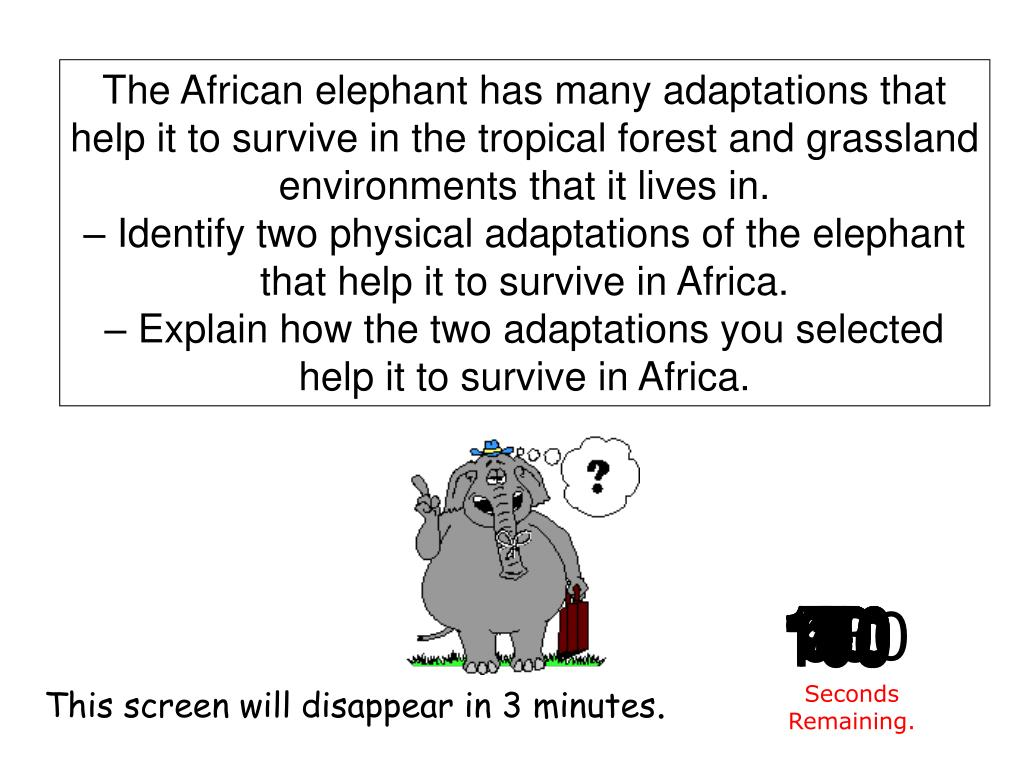 The African elephant has many adaptations that help it to survive in the tropical forest and grassland environments that it lives in.