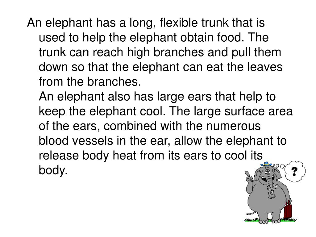An elephant has a long, flexible trunk that is used to help the elephant obtain food. The trunk can reach high branches and pull them down so that the elephant can eat the leaves from the branches.
