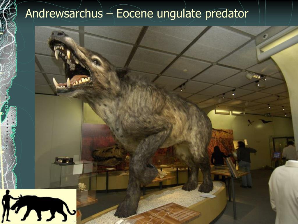 Andrewsarchus – Eocene ungulate predator