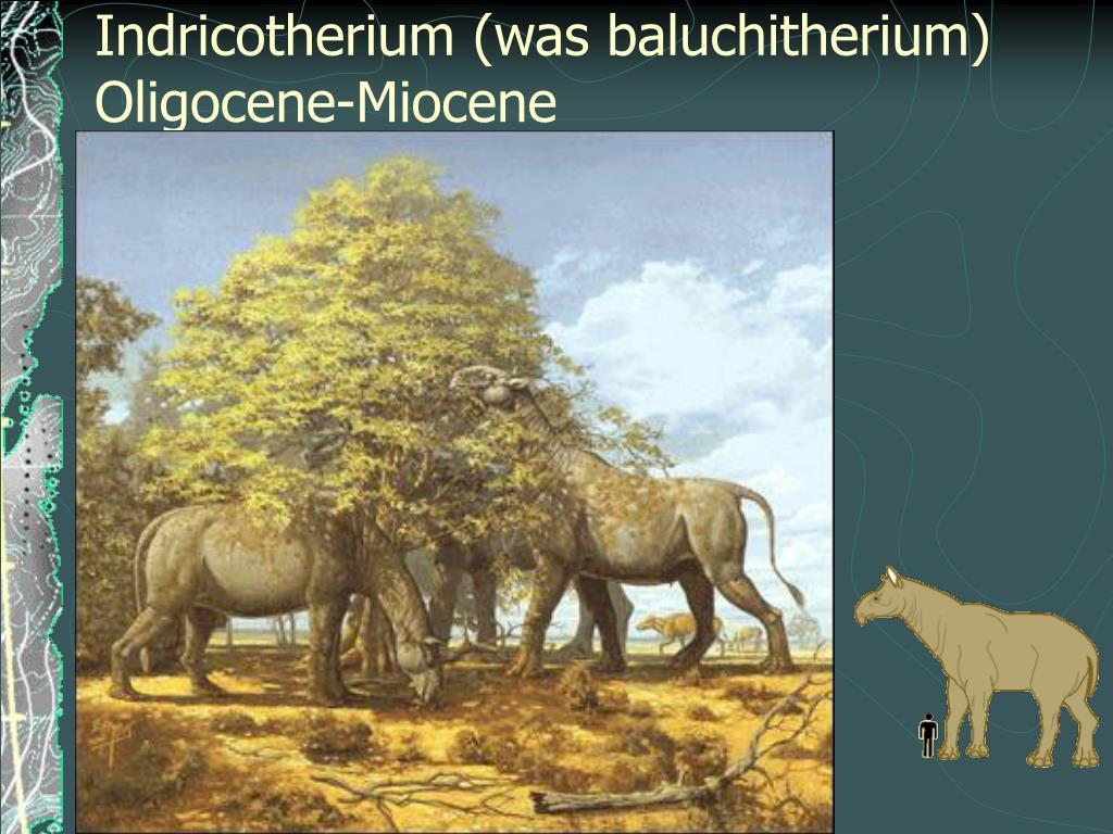 Indricotherium (was baluchitherium)