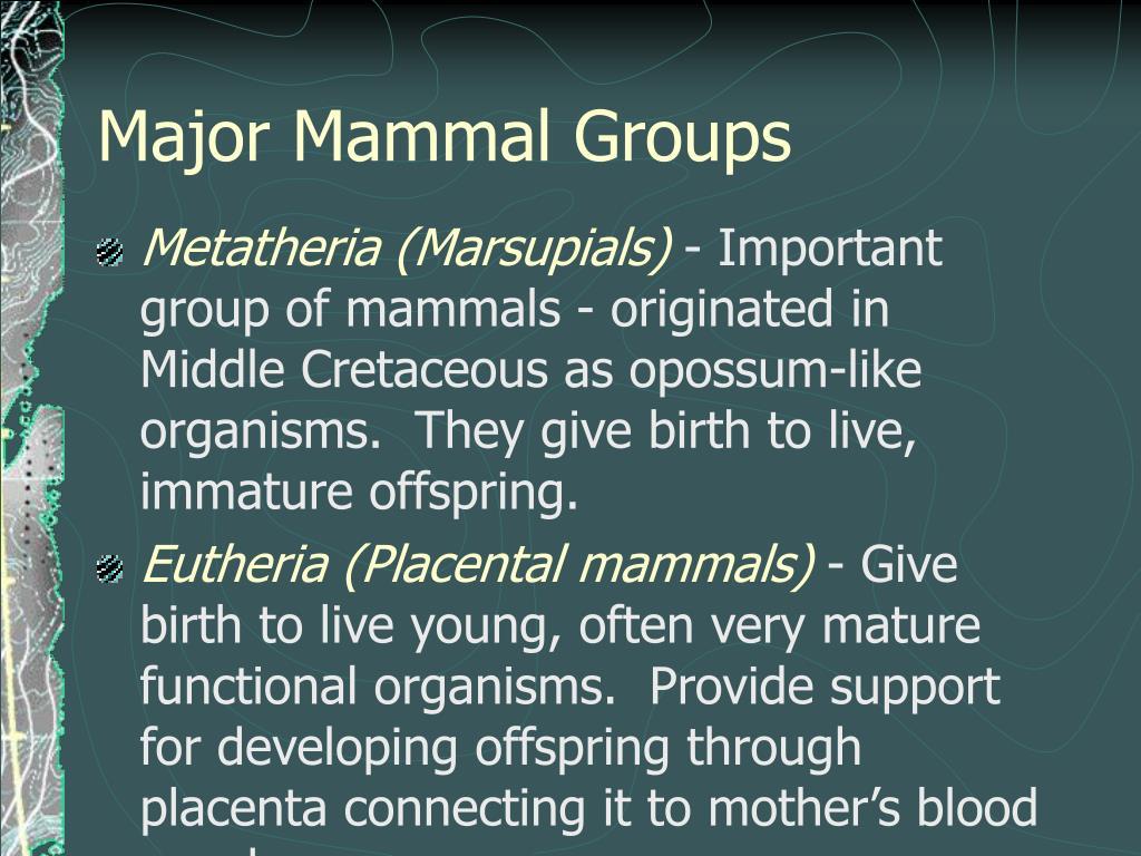 Major Mammal Groups