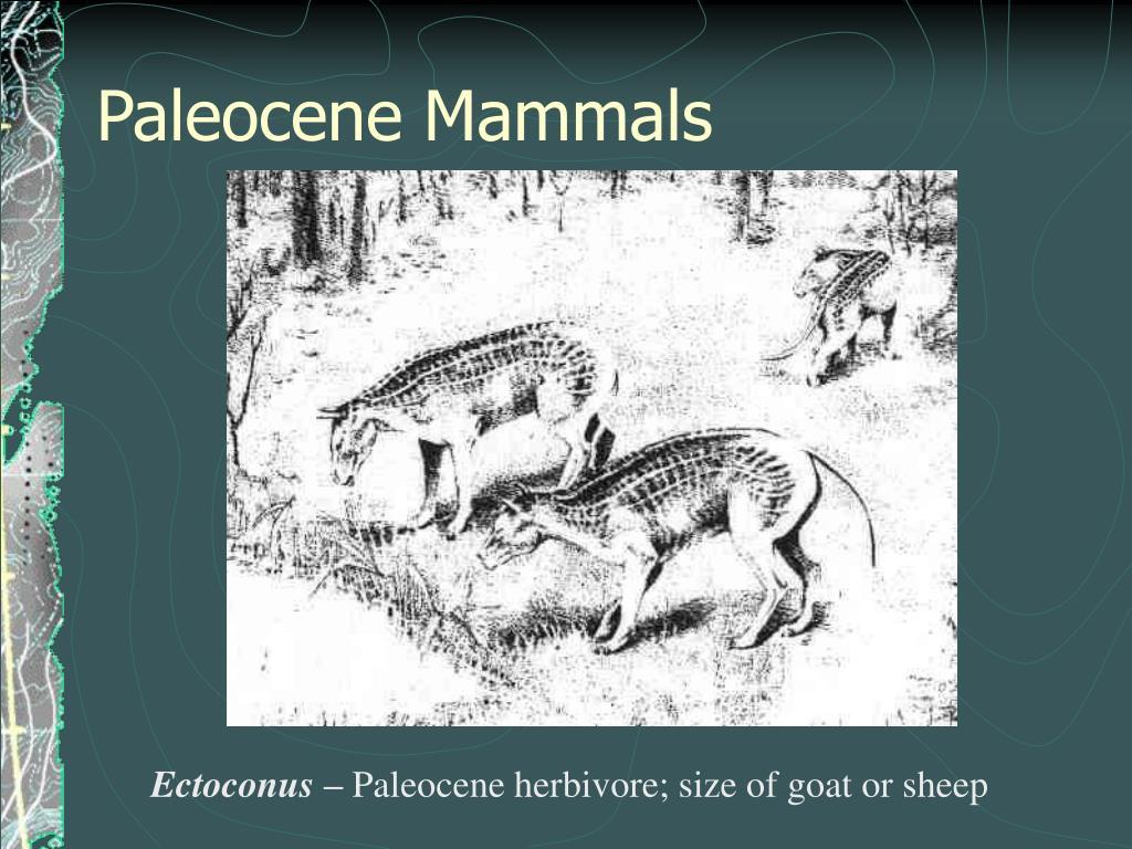 Paleocene Mammals