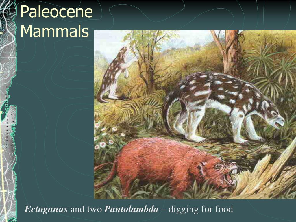 Paleocene