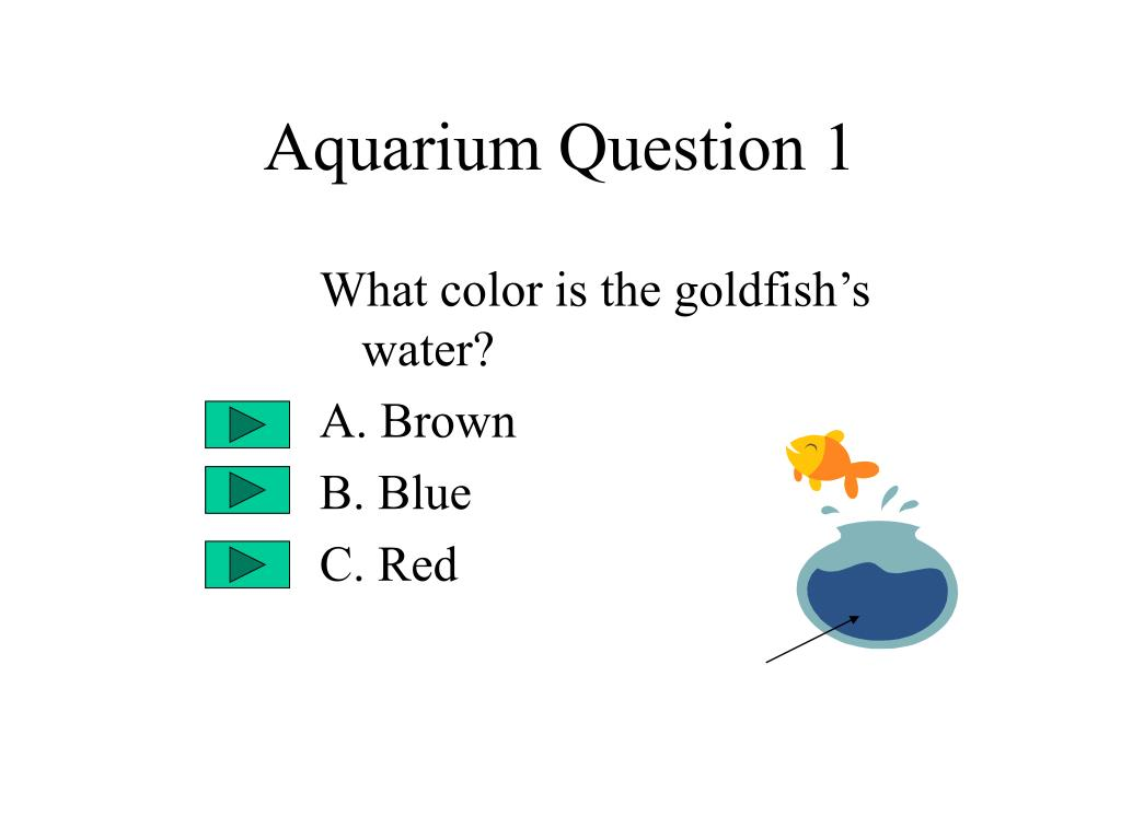 Aquarium Question 1