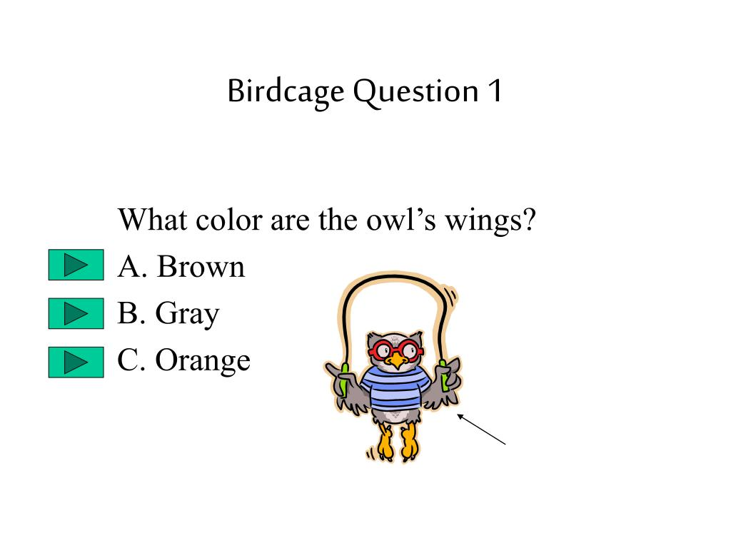 Birdcage Question 1