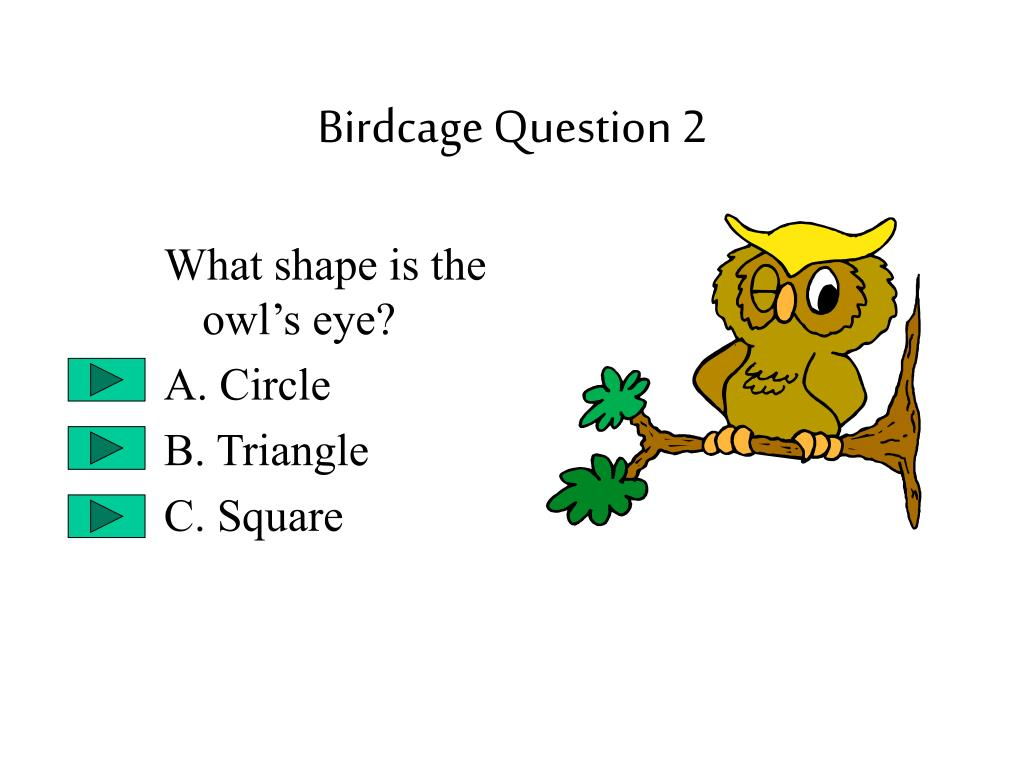 Birdcage Question 2