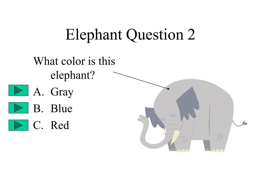 Elephant Question 2