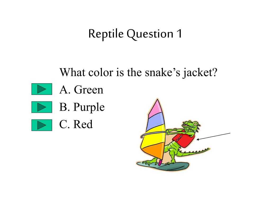 Reptile Question 1