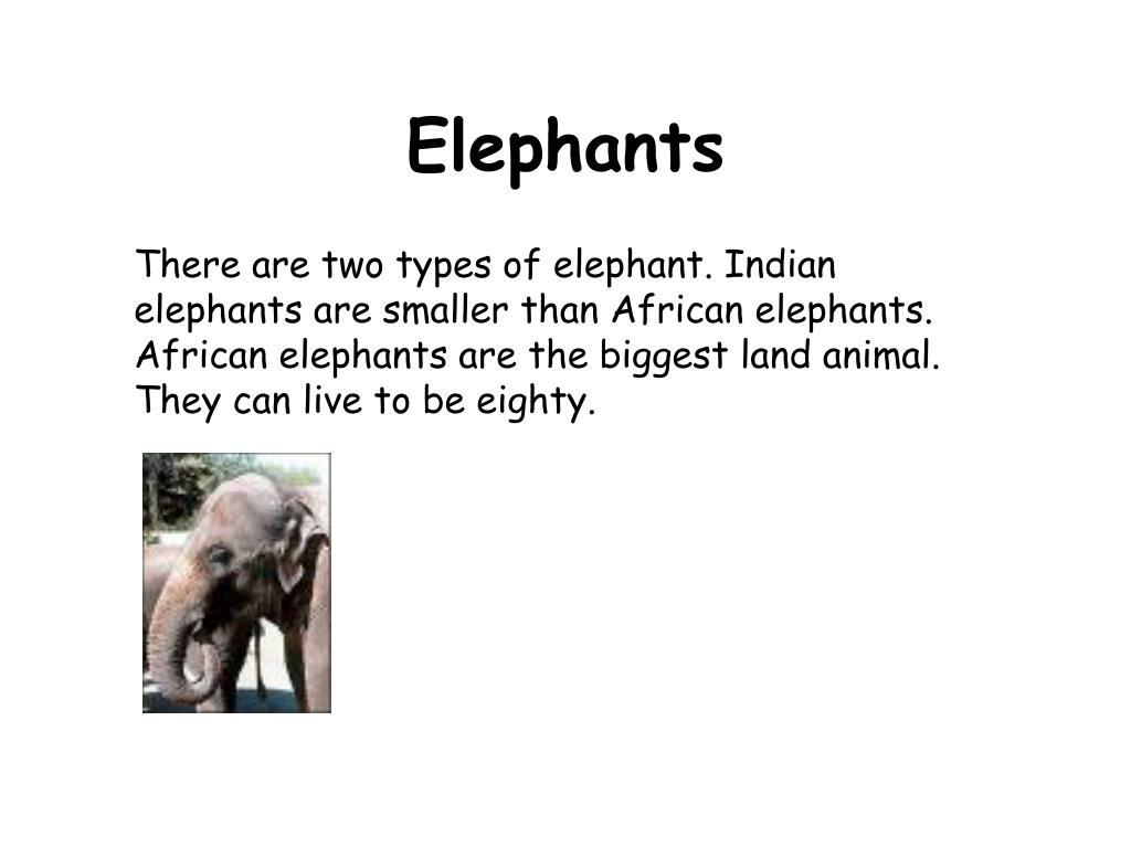 There are two types of elephant. Indian elephants are smaller than African elephants.  African elephants are the biggest land animal. They can live to be eighty.