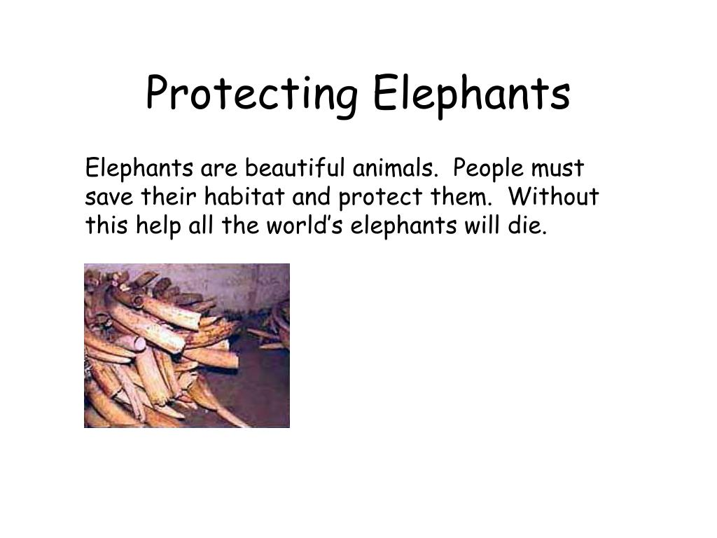 Protecting Elephants