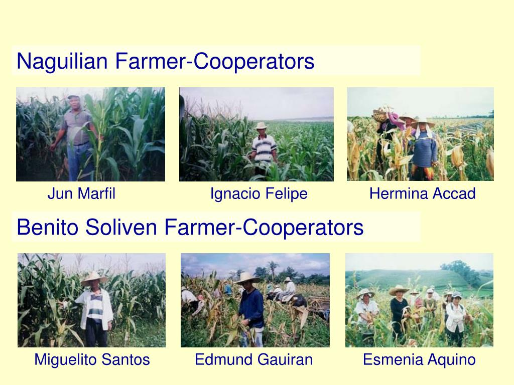 Naguilian Farmer-Cooperators