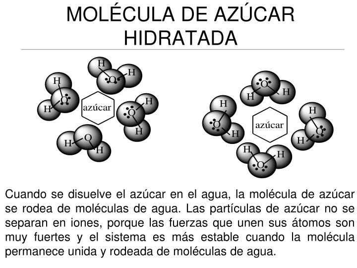 MOLÉCULA DE AZÚCAR HIDRATADA