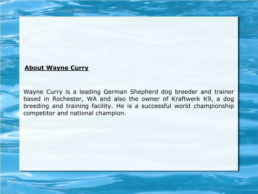 Wayne Curry is a leading German Shepherd dog breeder and trainer based in Rochester, WA and also the owner of Kraftwerk K9, a dog breeding and training facility. He is a successful world championship competitor and national champion.