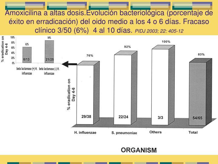 Amoxicilina a altas dosis.Evolución bacteriológica (porcentaje de éxito en erradicación) del oido medio a los 4 o 6 días. Fracaso clínico 3/50 (6%)  4 al 10 días.
