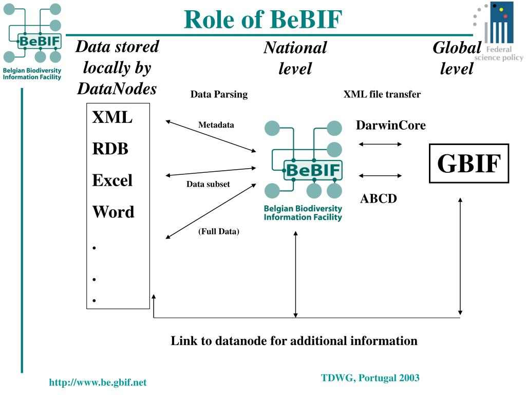 Role of BeBIF