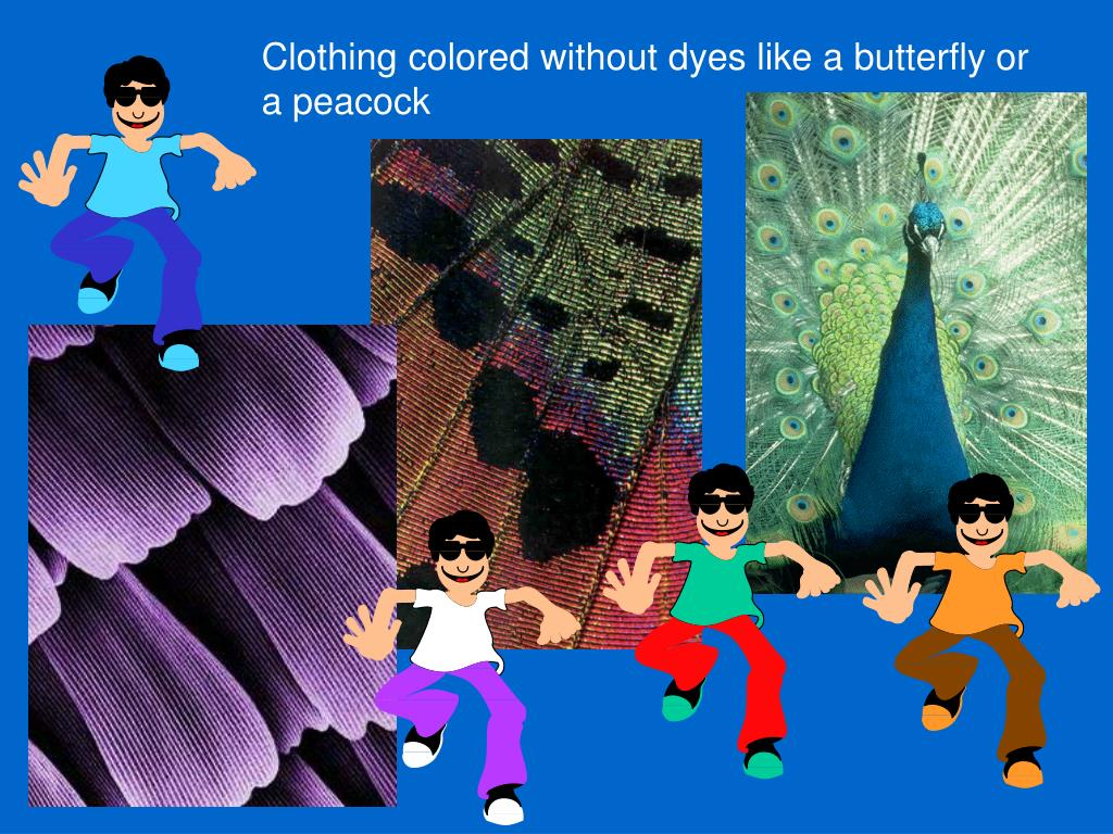 Clothing colored without dyes like a butterfly or a peacock