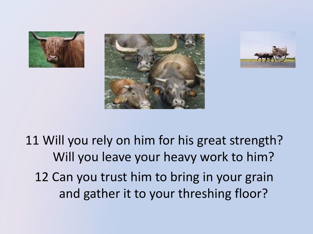 11 Will you rely on him for his great strength?