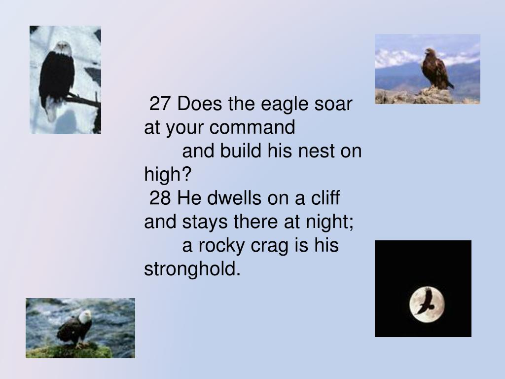 27 Does the eagle soar at your command
