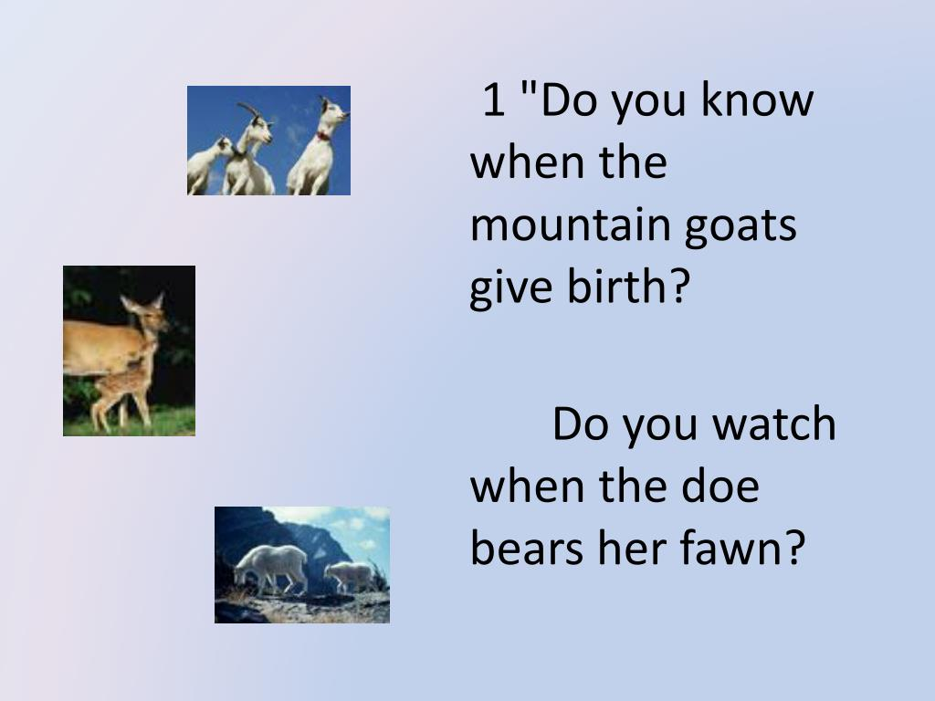 """1 """"Do you know when the mountain goats give birth?"""