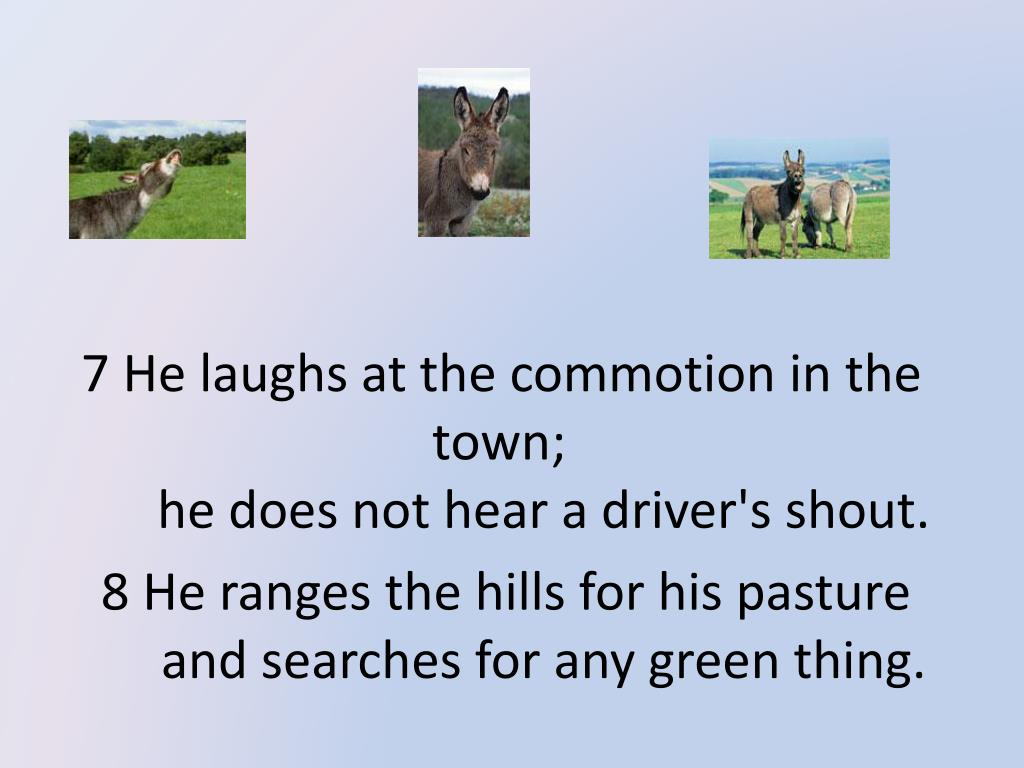 7 He laughs at the commotion in the town;