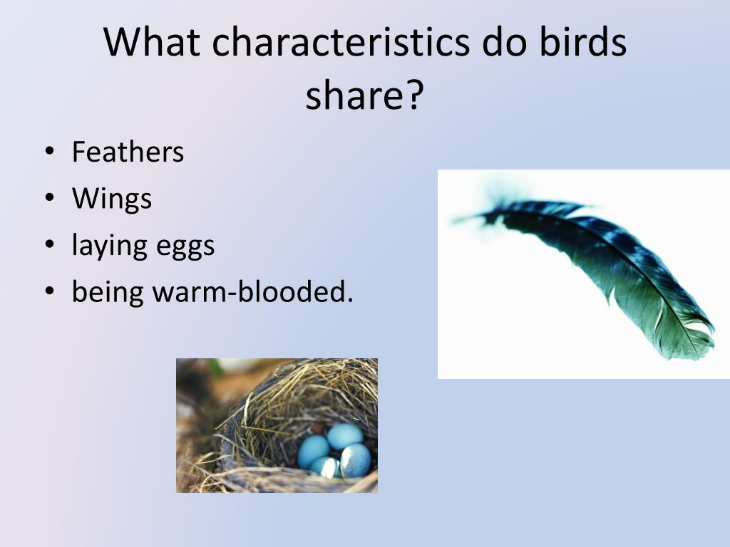 What characteristics do birds share?