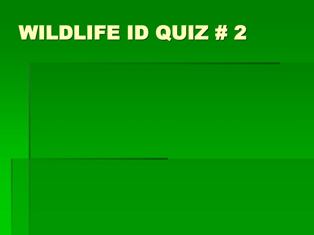 WILDLIFE ID QUIZ # 2