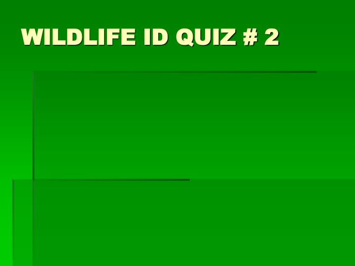 Wildlife id quiz 2 l.jpg
