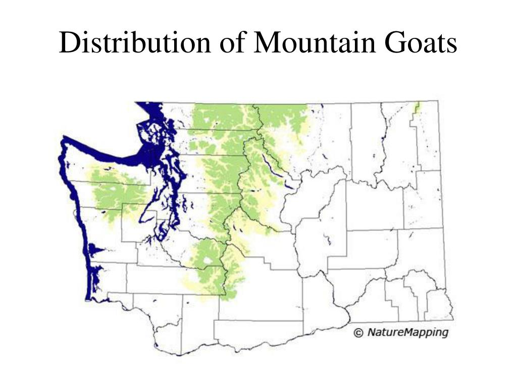 Distribution of Mountain Goats