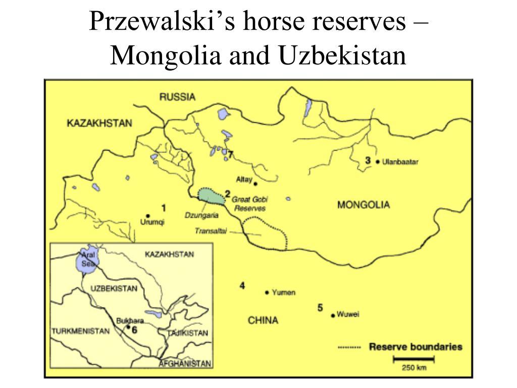 Przewalski's horse reserves – Mongolia and Uzbekistan