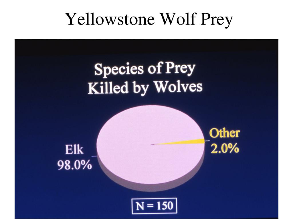 Yellowstone Wolf Prey