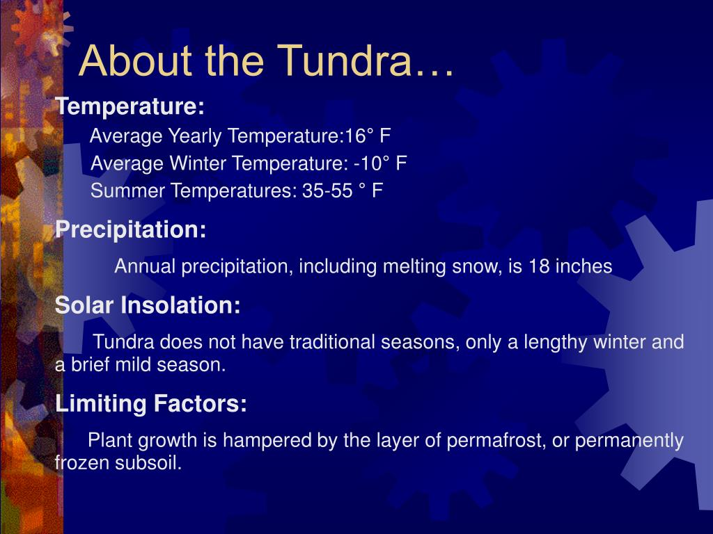 About the Tundra…