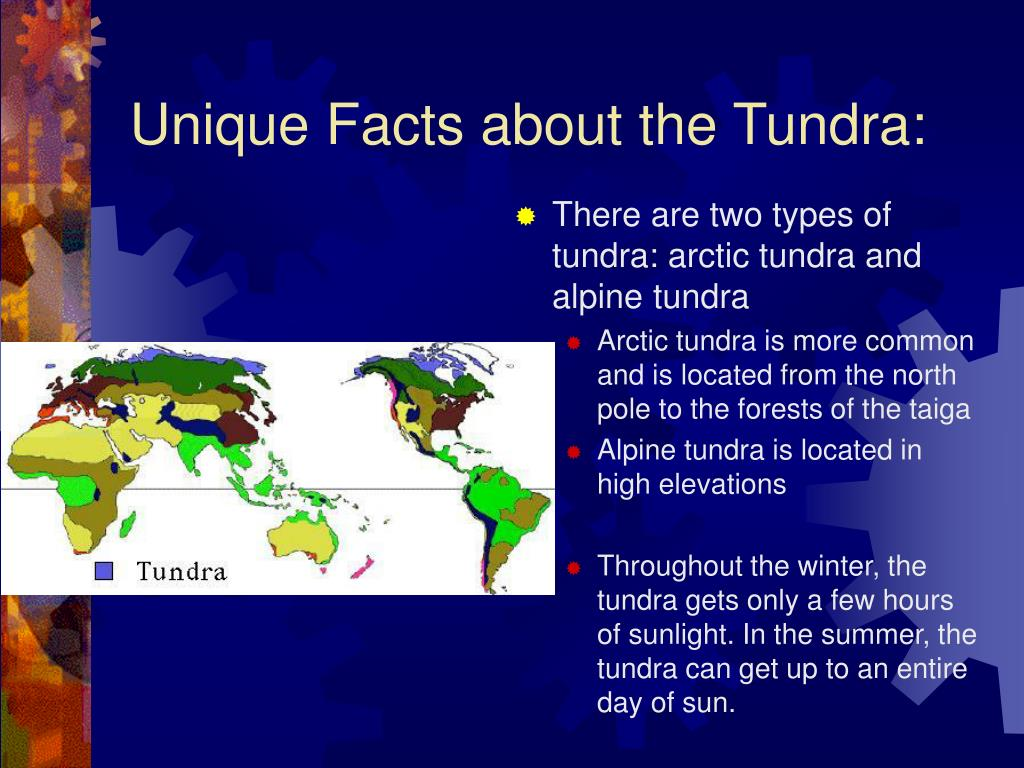 Unique Facts about the Tundra: