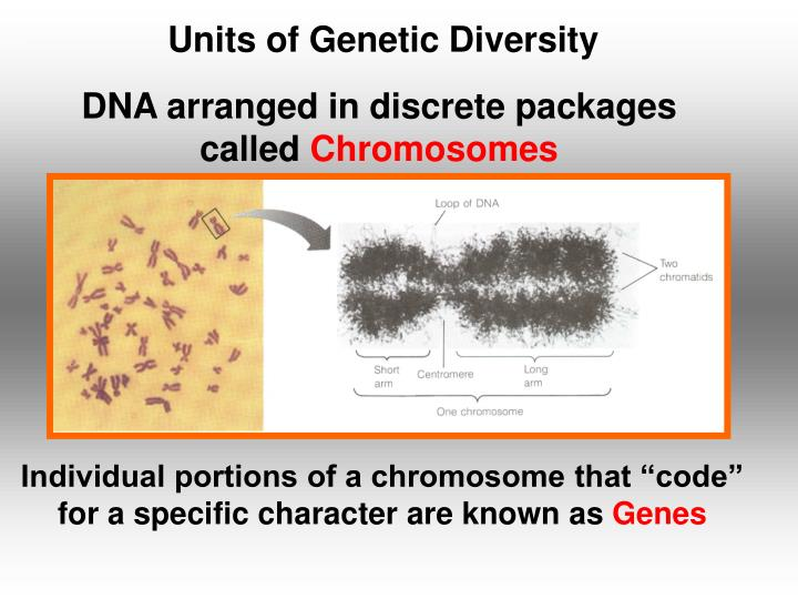 DNA arranged in discrete packages called