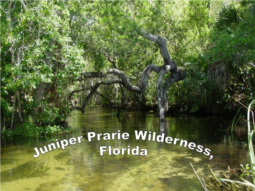 Juniper Prarie Wilderness,