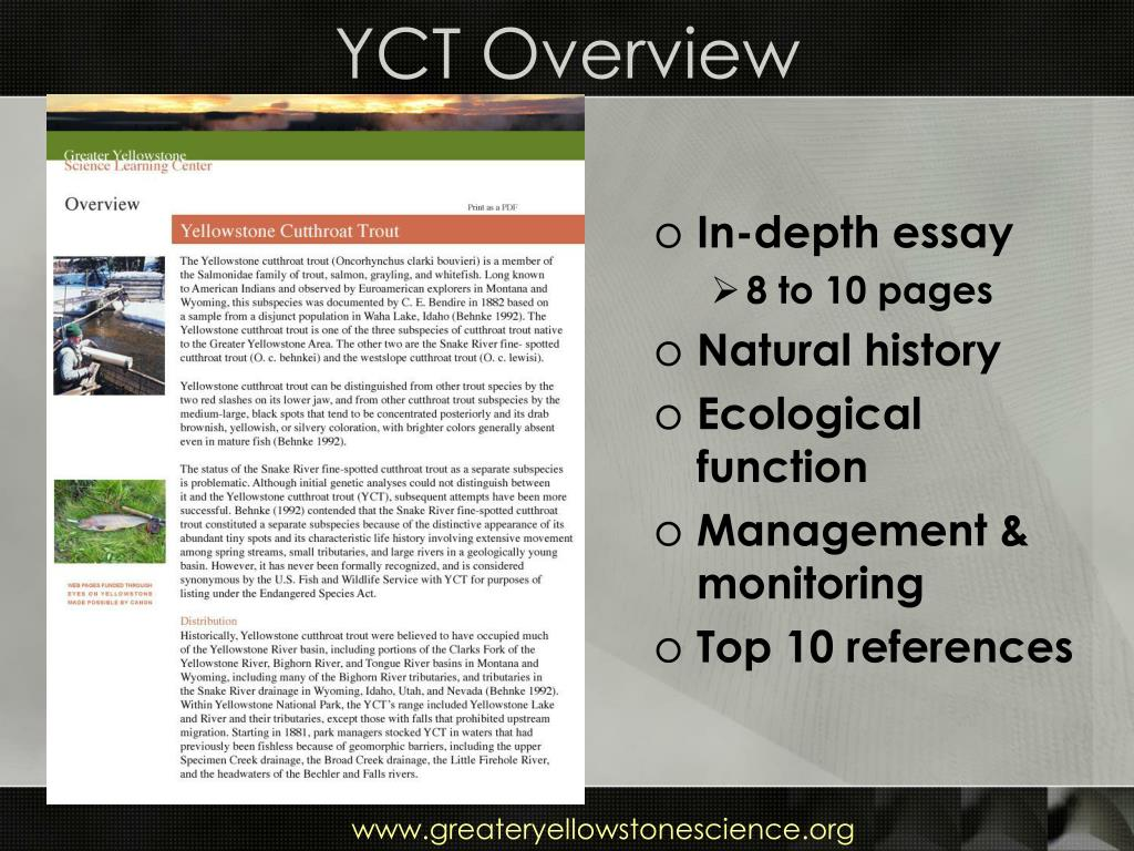 YCT Overview