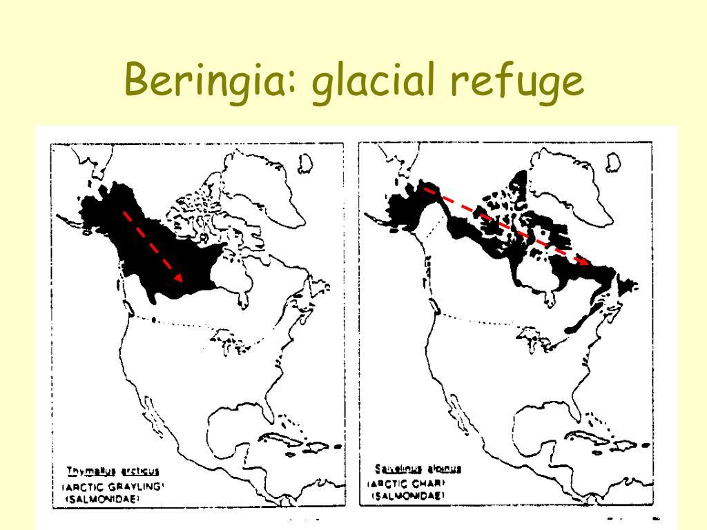 Beringia: glacial refuge