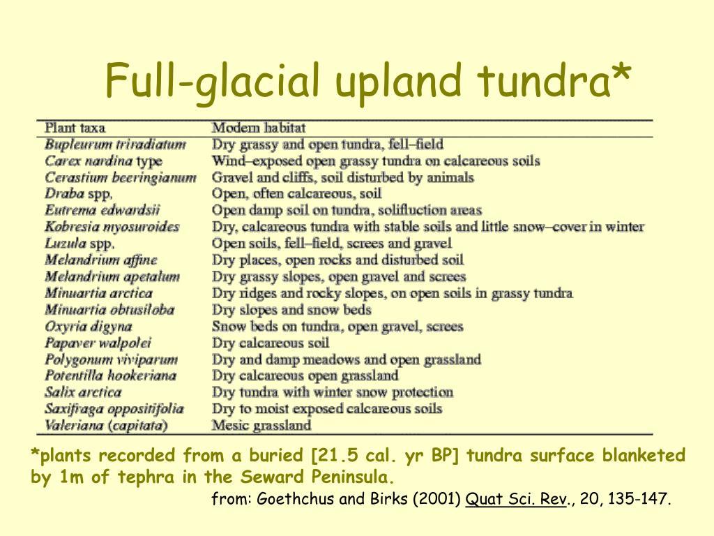 Full-glacial upland tundra*