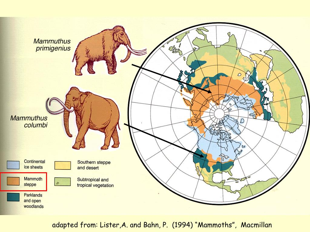 "adapted from: Lister,A. and Bahn, P.  (1994) ""Mammoths"",  Macmillan"