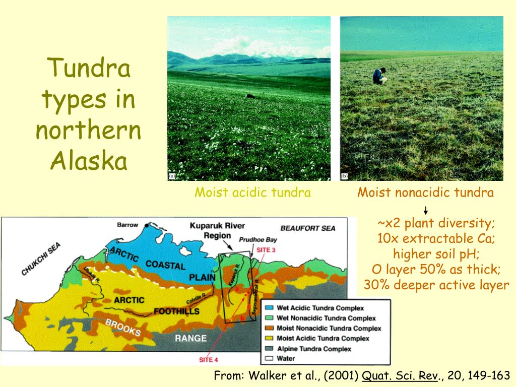 Tundra types in northern Alaska