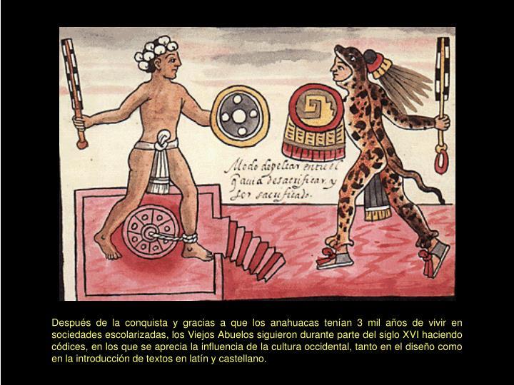 Después de la conquista y gracias a que los anahuacas tenían 3 mil años de vivir en sociedades escolarizadas, los Viejos Abuelos siguieron durante parte del siglo XVI haciendo códices, en los que se aprecia la influencia de la cultura occidental, tanto en el diseño como en la introducción de textos en latín y castellano.