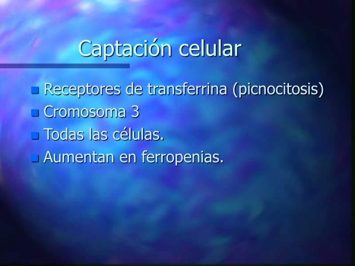 Captación celular